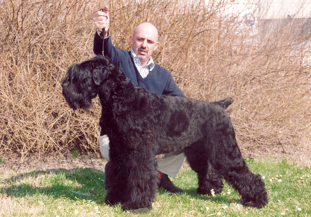 Terrier nero